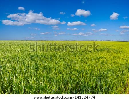 green rural field panorama - stock photo
