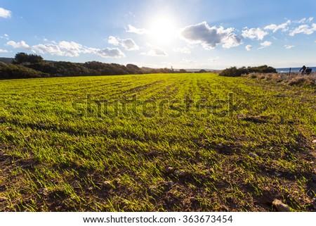 green rural fields landscape - stock photo