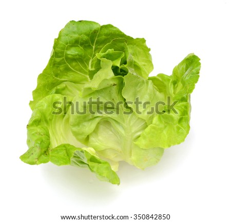 Green salad leaf isolated