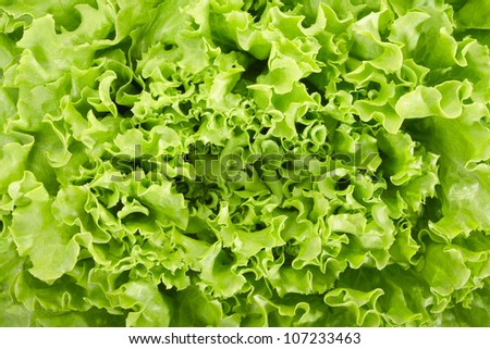 Green salad texture background