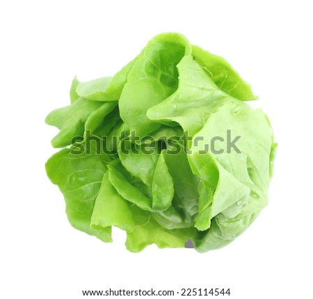 Green salad vegetable isolated on white.