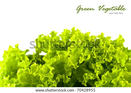 Green salad vegetable on white background with copy space.
