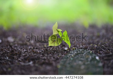 Green sapling , young plant showing ecology growth or nature concept - stock photo