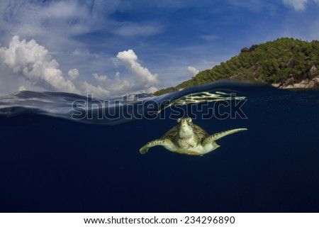 Green Sea Turtle and tropical paradise island - stock photo