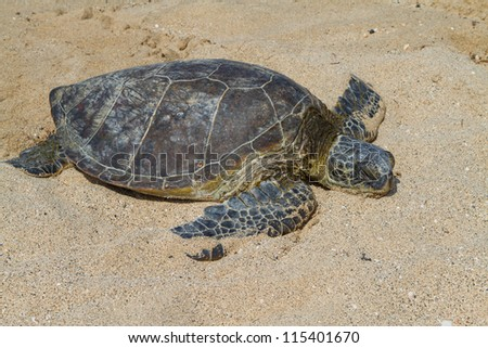 Green Sea turtle having a rest on the hot beach on Hawaii - stock photo