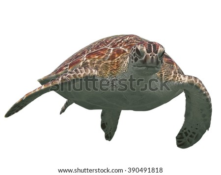 Green sea turtle isolated, tropical tortoise on white - stock photo