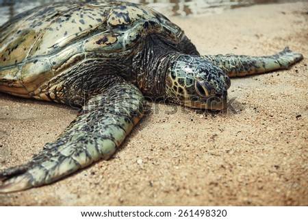 green sea turtle on the beach - stock photo