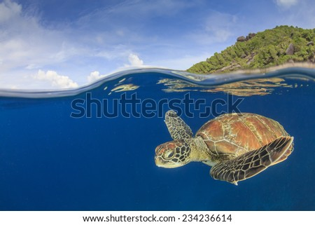 Green Sea Turtle underwater in sea beside tropical island paradise - stock photo