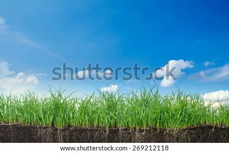 Green section of a grass with the soil and roots under blue sky - stock photo