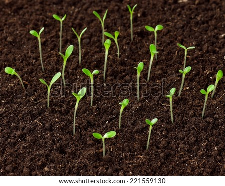 Green seedling - stock photo