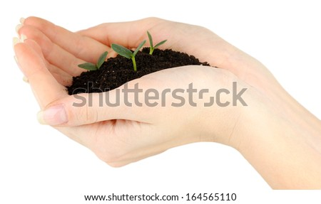 Green seedling growing from soil in hands - stock photo
