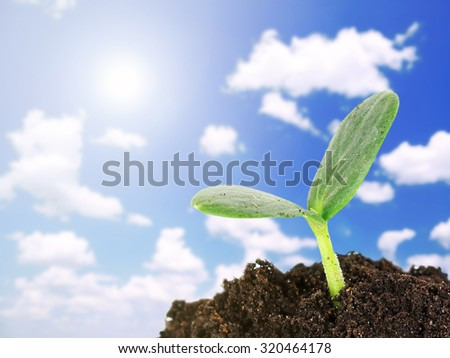 Green seedling growing from soil on blue sky background - stock photo