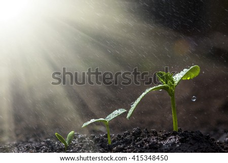 Green seedling growing on the ground in the rain. - stock photo