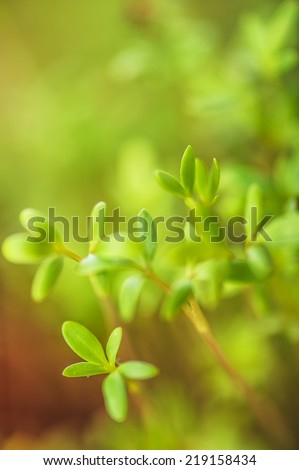 Green seedling grows in spring. - stock photo
