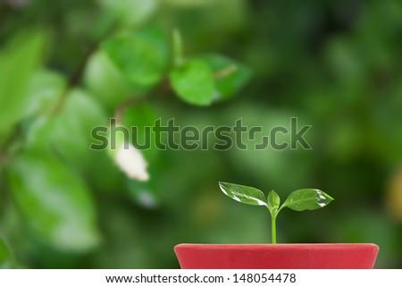 green seedling in flowerpot on verdant garden background - stock photo