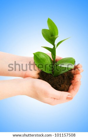 Green seedling in hand isolated on white - stock photo