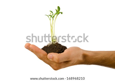 Green seedling in the hand - stock photo