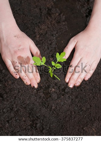 Green seedling in the soil and female hands. Spring planting season.