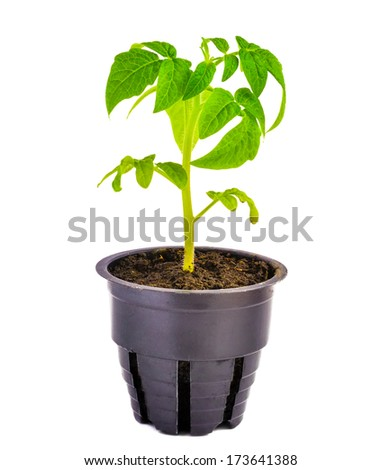 Green seedling is isolated on white background - stock photo