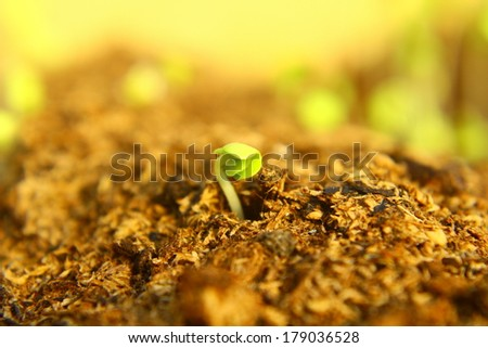 Green seedlings in new life concept,Closeup. - stock photo