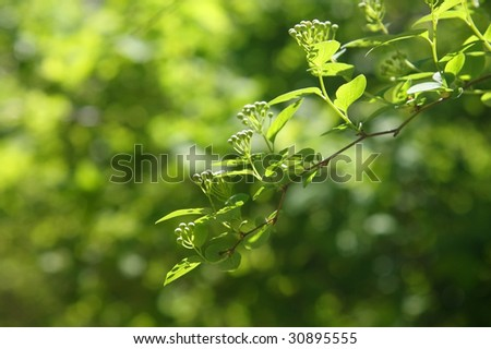 Green sheet on a blured background of foliage