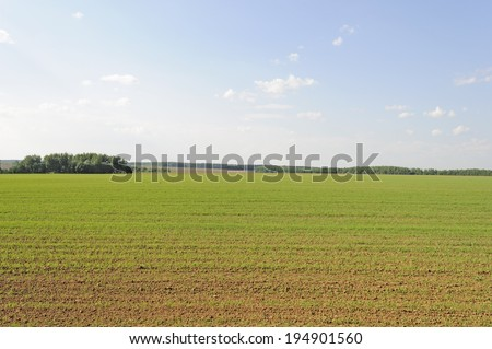 Green shoots of wheat on a farm field - stock photo
