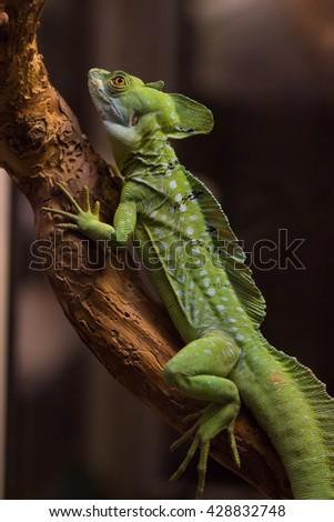 Green skin lizard crawling on tree - stock photo