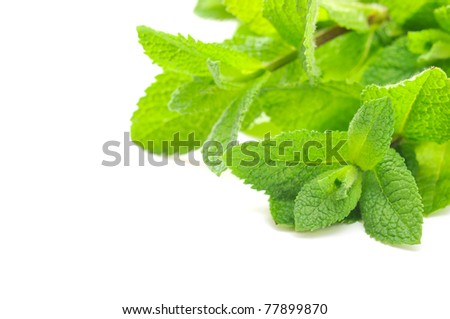 Green small mint on the white background - stock photo