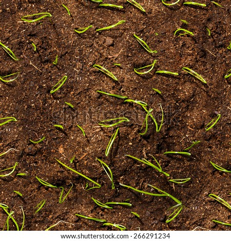Green small plant seedlings in soil - stock photo