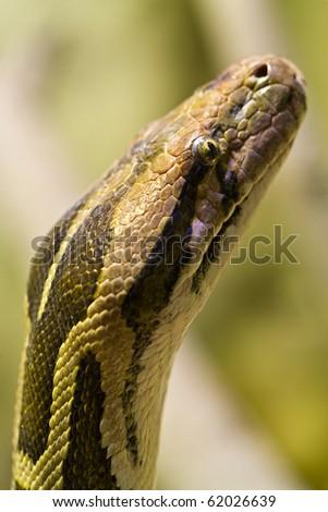 Green snake huntting - stock photo