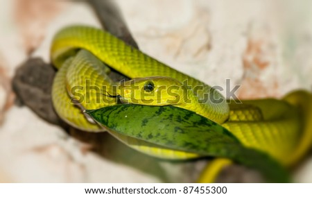 Green snake in a forest close-up