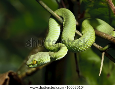 Green snake in rain forest, Thailand - stock photo