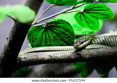 green snake in Thailand jungle - stock photo