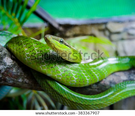 green snake in the cage