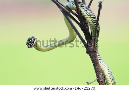 Green Snake on branch tree - stock photo