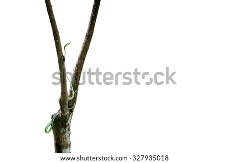 Green snake on tree isolated on white background with clipping path