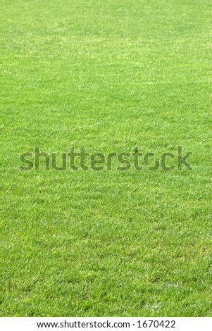 Green soccer grass