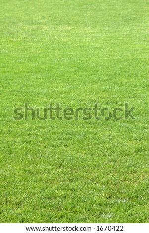 Green soccer grass - stock photo