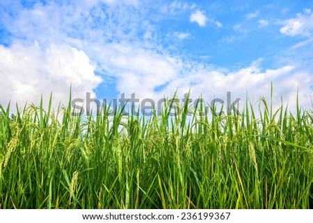Green spike with blue sky and white cloud background.