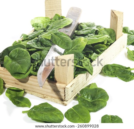 Green spinach in a crate on a white background - stock photo