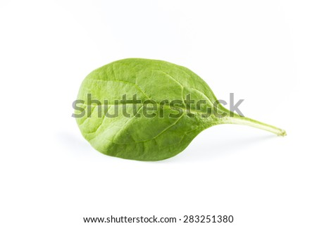 Green spinach leafs on a white background - stock photo