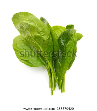 Green spinach on a white background - stock photo