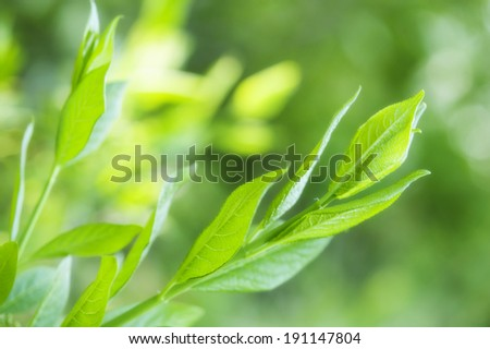 green spring background with fresh new leaves