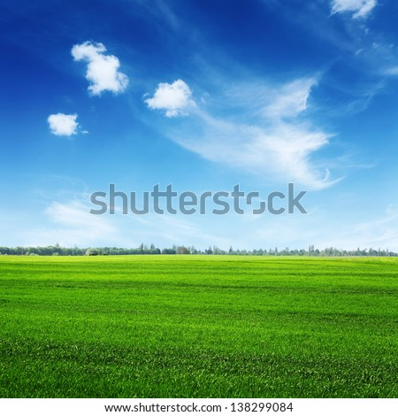 green spring field and clouds on blue sky, rural landscape with trees on horizon