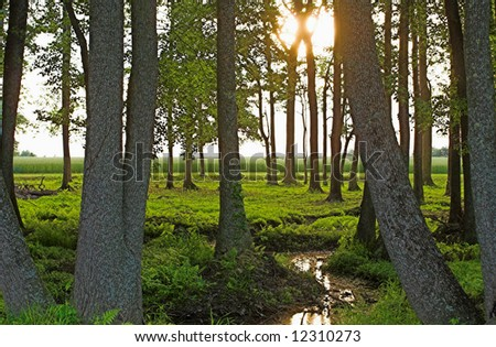 Green Spring Forest - stock photo