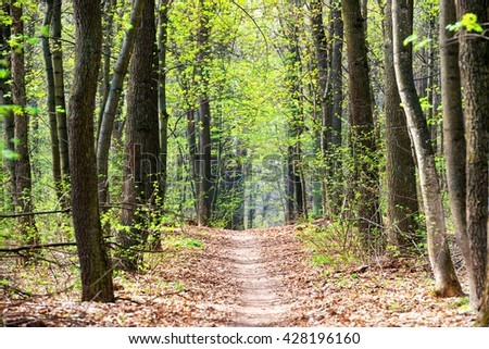 Green spring forest with first spring leaves and path - stock photo