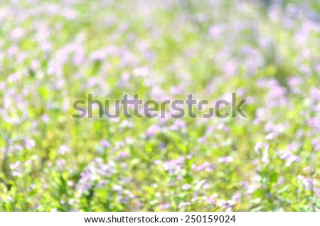 Green spring grass lawn defocused abstract background  - stock photo