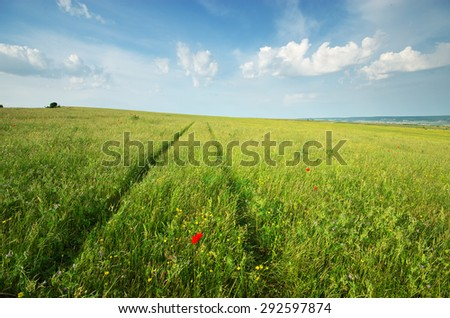 Green spring meadow and road lane in grass. Natural landscape composition. - stock photo