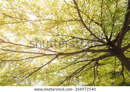 Green spring tree branches wit sunlight - stock photo