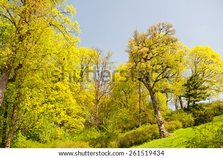 Green spring trees foliage vibrant nature view, plants bright leaves in sunlight bucolic calm sunny day view in Warsaw park, Europe. Deciduous trees in horizontal orientation, nobody. - stock photo